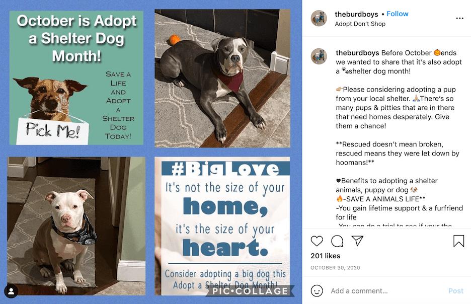 october social media ideas - adopt a shelter dog month