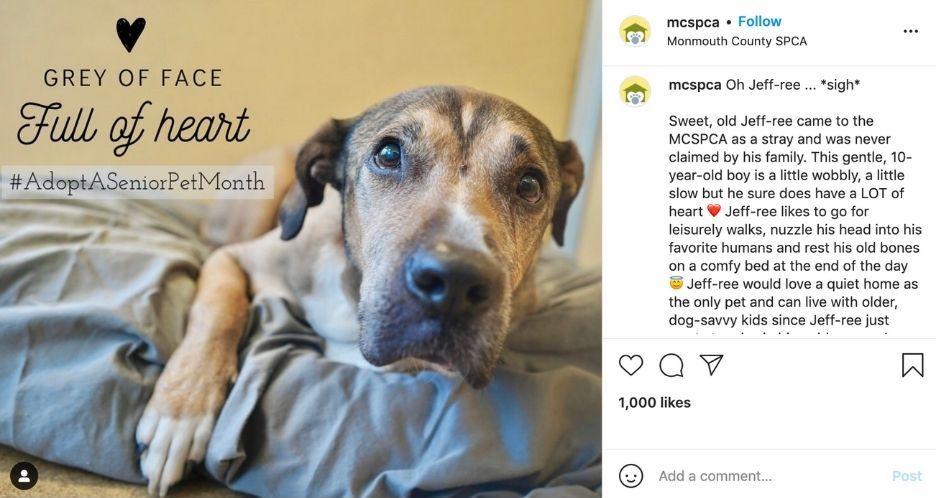 november social media holidays - adopt a senior pet month example